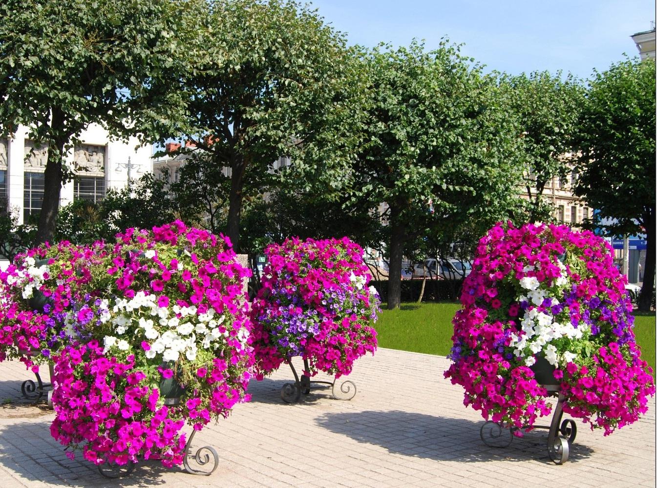 меня растения на улицах города фото молодые