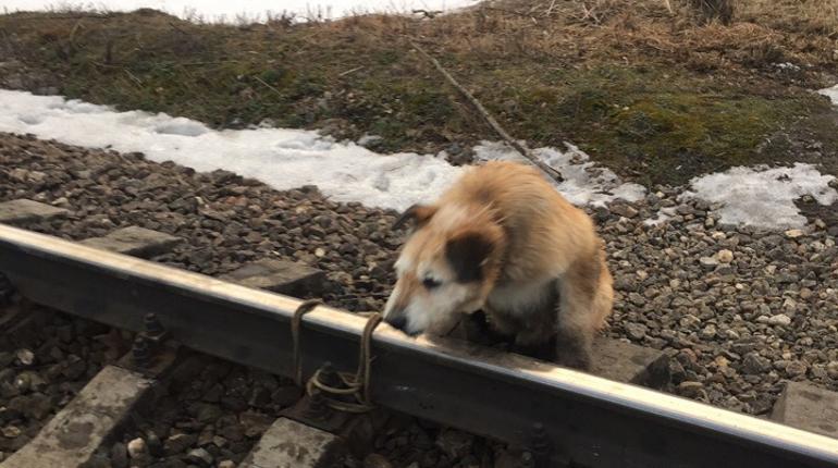 Спасенного пса забрали у хозяина. Фото: vk.com/club175336494