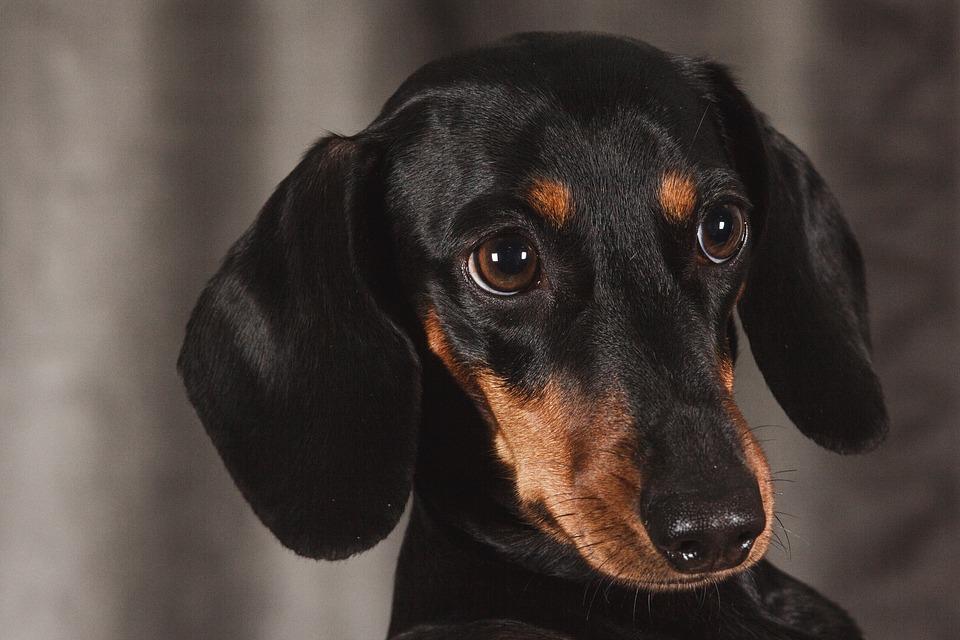 В России выгул опасных собак без поводка и намордника будет законодательно запрещен. Фото: Рixabay