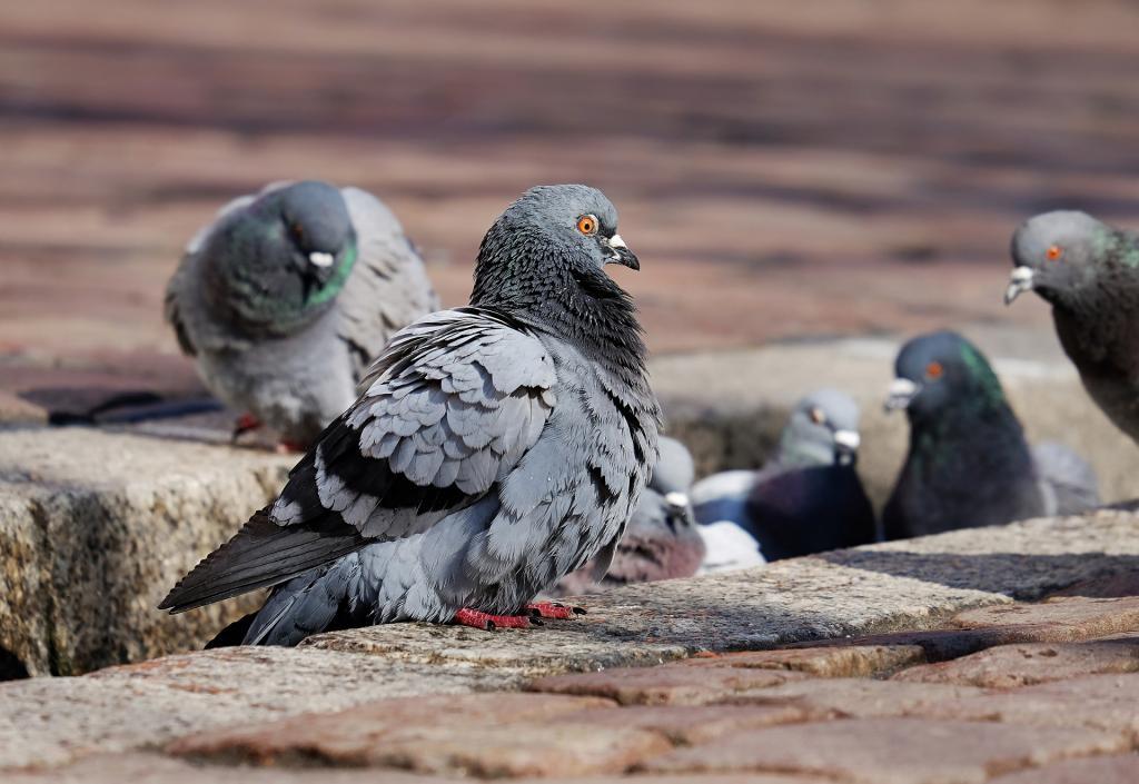 Чудесное спасение: поломанного голубя люди на тримаране выловили из реки Карповки