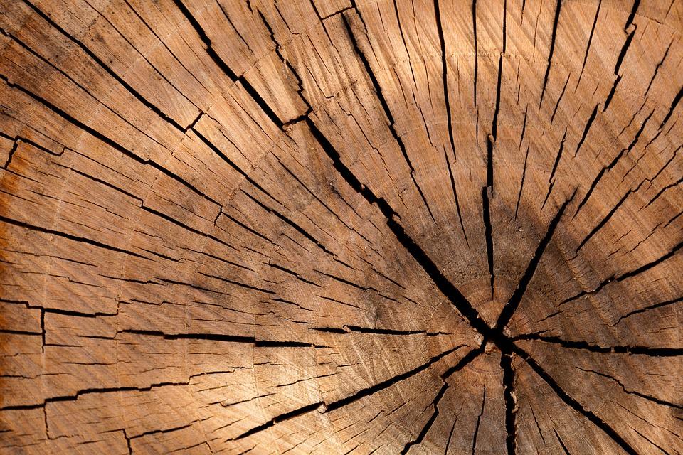 Злоумышленники наворовали древесины почти на 10 млн Фото: pixabay