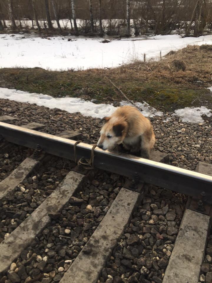 Мужчине пришлось остановить поезд, чтобы спасти пса. Фото: https://vk.com/club175336494