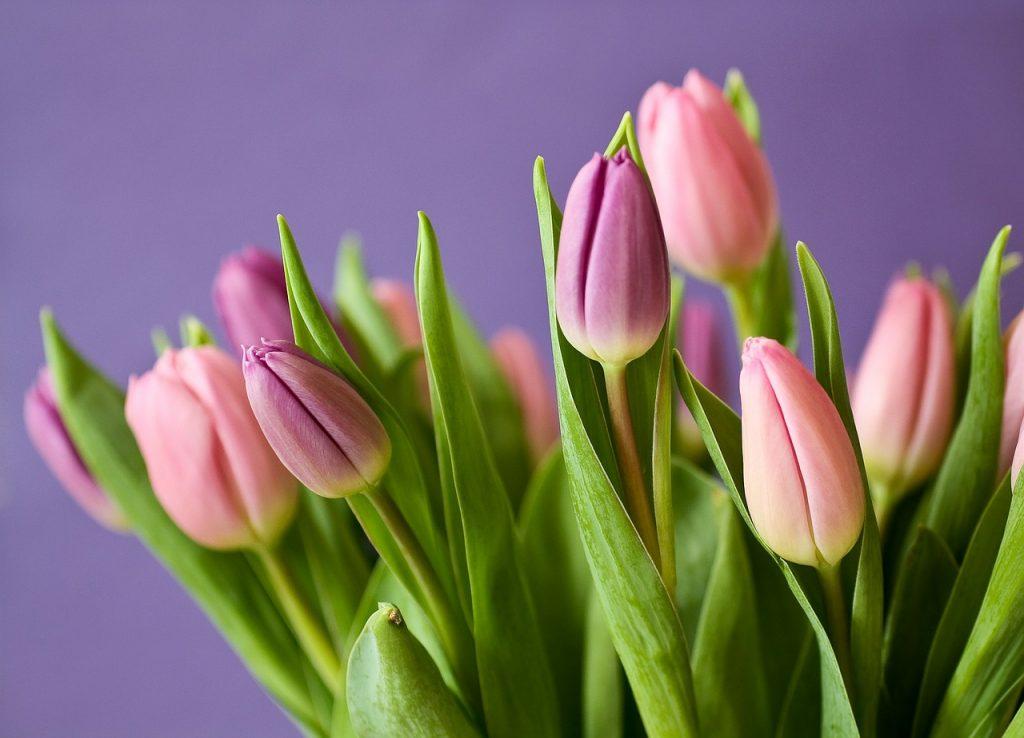 На таможнях Петербурга очереди из фур с цветами к 8 марта