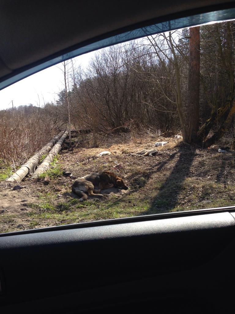 Пользователи пишут, что это уже не первый подобный случай в Кировском районе Ленобласти. Фото: https://vk.com/sluhotradnoe