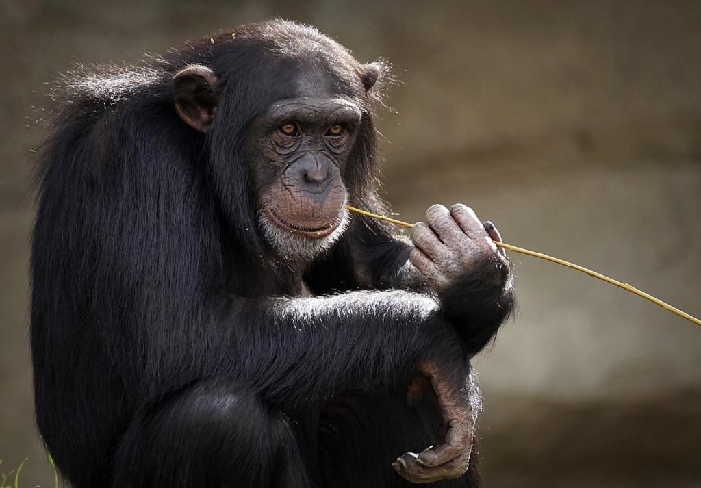 Американские зоопарки начали прививать животных от COVID-19