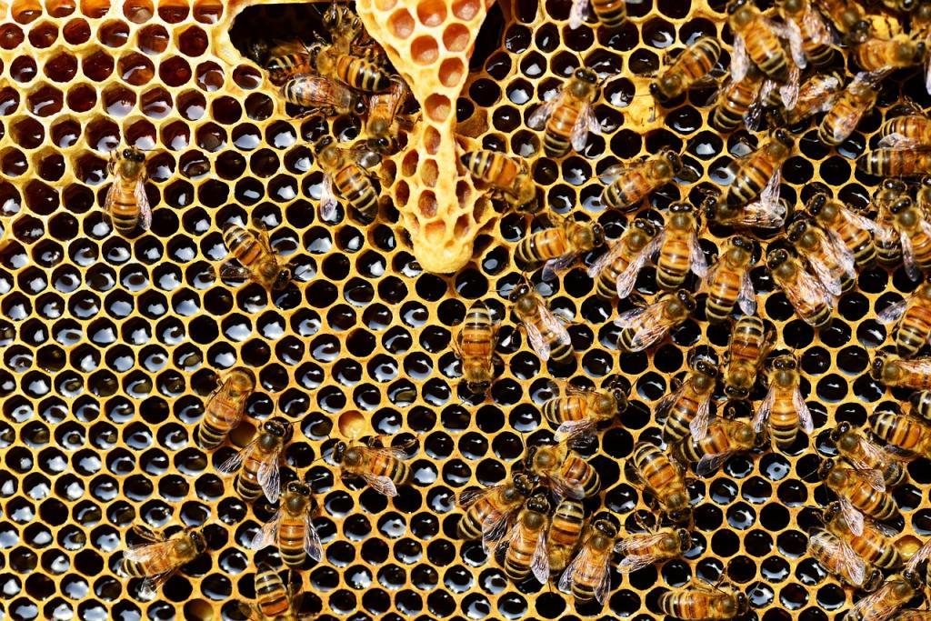 Белорусские пчелы прибыли в Петербург