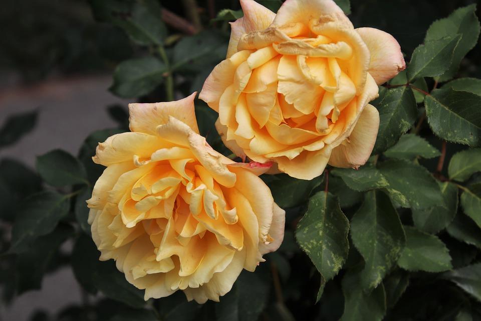 Теплица Ленобласти планирует вырастить в этом году более 32 млн цветов