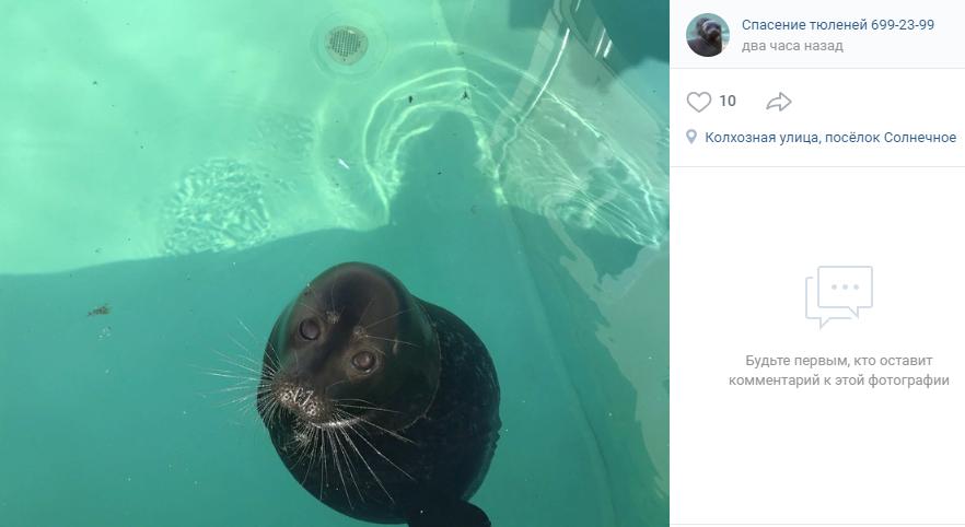 В Петербурге ищут исполнителя рэпа про тюленя Крошика