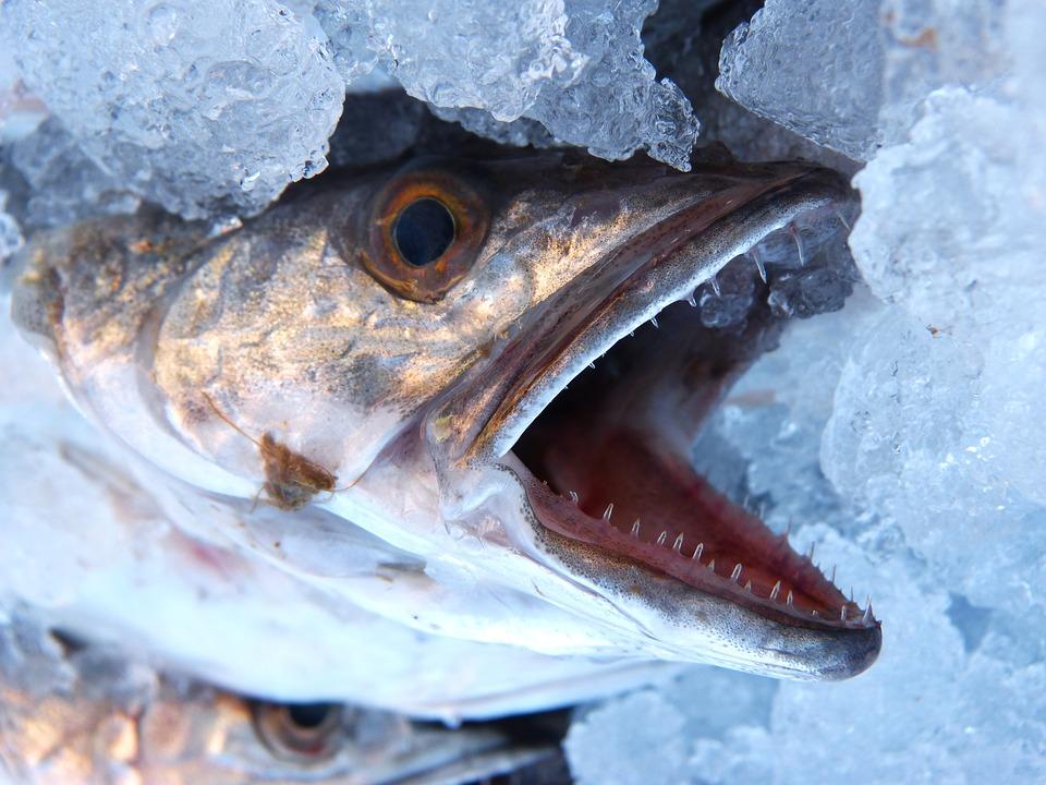 Скрыпник константин рыба хабаровск фото мне нравится