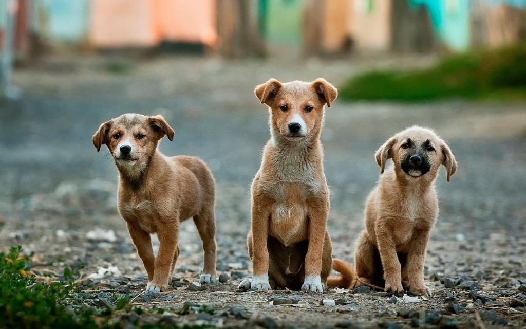 Депутаты предложили Дрозденко создать приют для животных