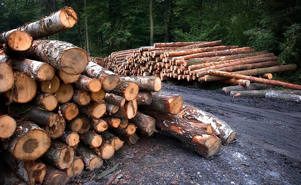 «Зеленый Фронт» не заметил сокращения вырубки лесов в Ленобласти
