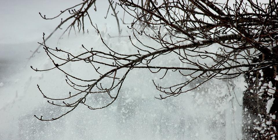 В МЧС петербуржцев предупредили об усилении ветра 23 февраля