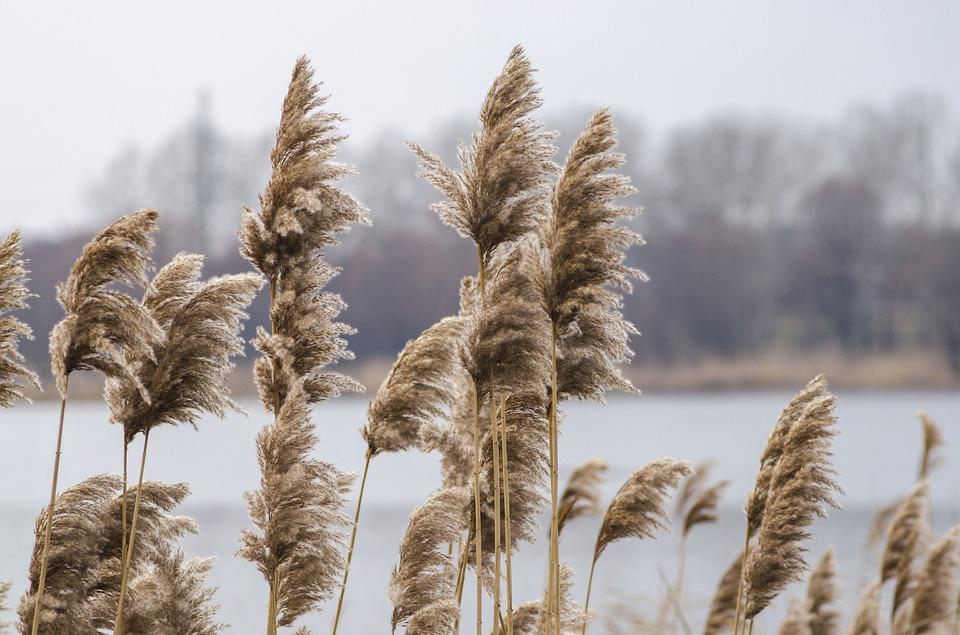 В водоемах Петербурга и Ленобласти обнаружили опасно высокое содержание металлов