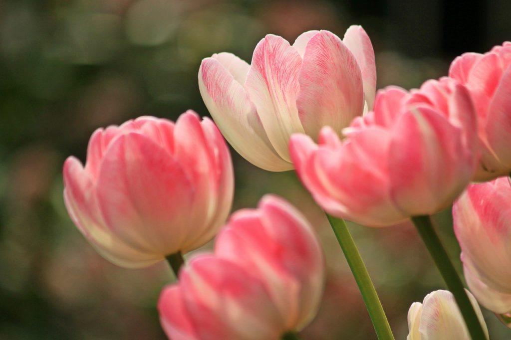 Стало известно, насколько подскочат цены на цветы к 8 марта