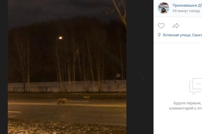 Внимание петербуржцев привлекла лиса на Мебельной улице