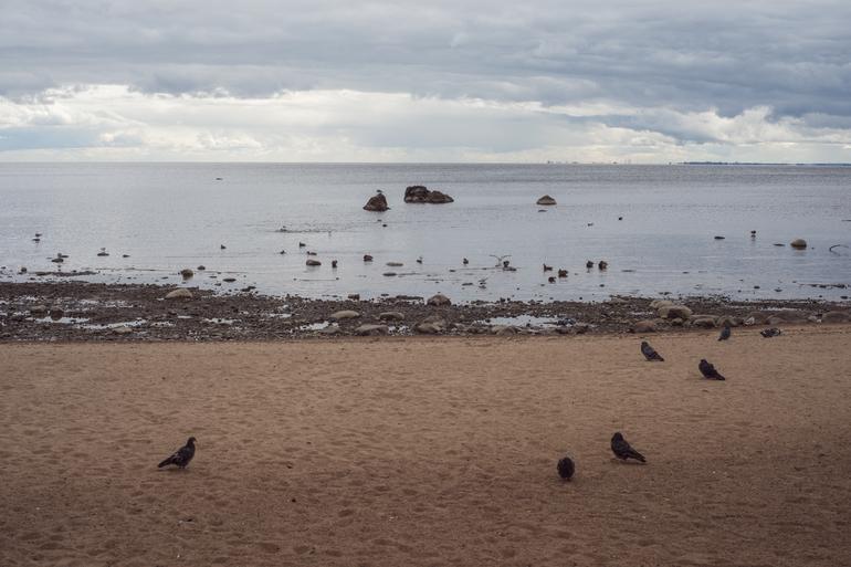 Из Финского залива достали труп женщины в купальнике