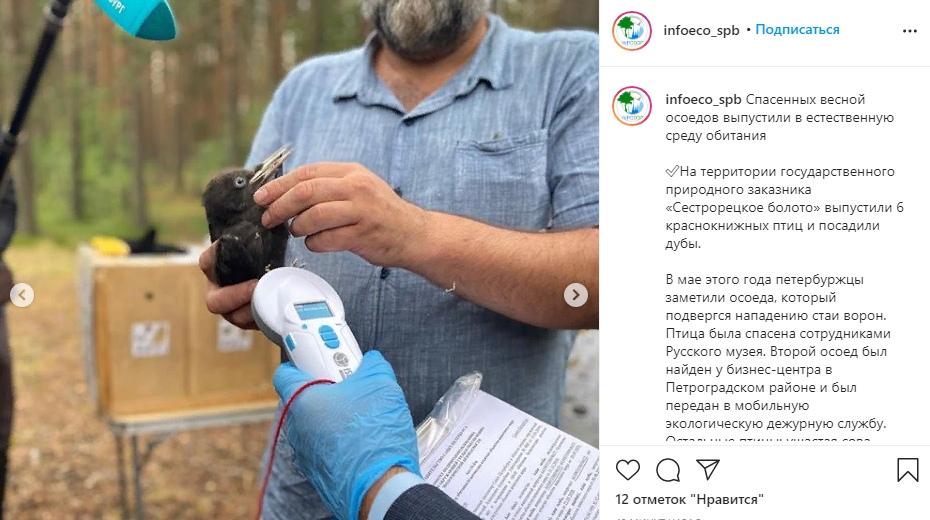 В Петербурге выпустили на волю шесть краснокнижных птиц