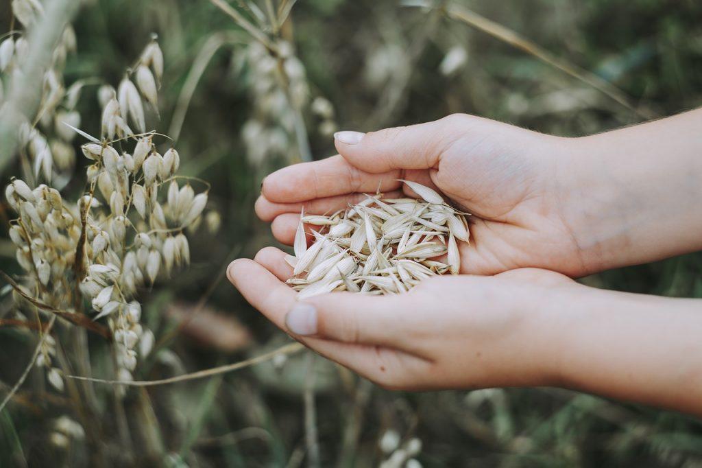 В Ленобласти отозвали разрешение на размещение в регионе зернового терминала в Батарейной