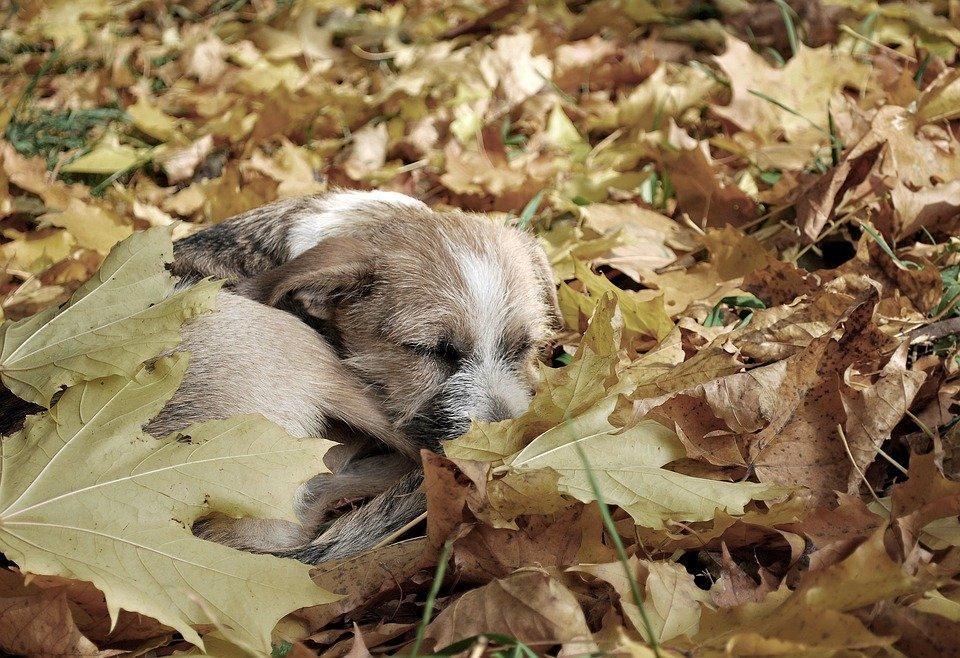 В Петербурге насчитали 7 тысяч бездомных собак и 20 тысяч — кошек