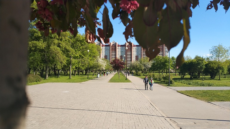 Парки и скверы Петербурга закрыли из-за ветра и гроз