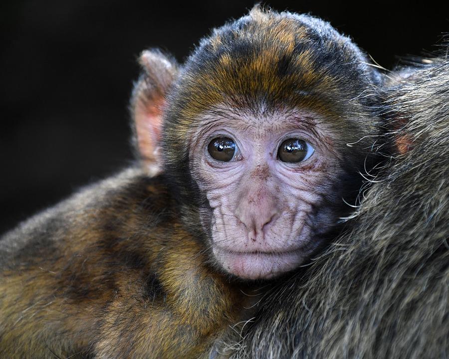 Смерть человека от вируса обезьяны впервые подтвердили в Китае
