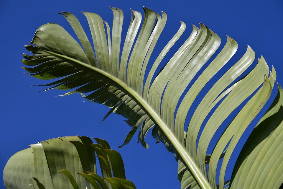 Банановые волокна предложили использовать для производства машин