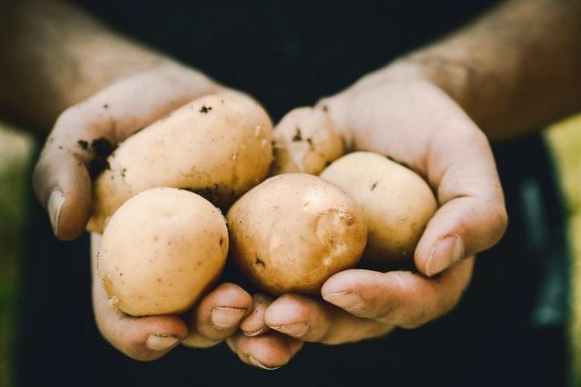 Российские производители хотят продавать в магазинах картофель «экономкласса» под предлогом сдерживания цен