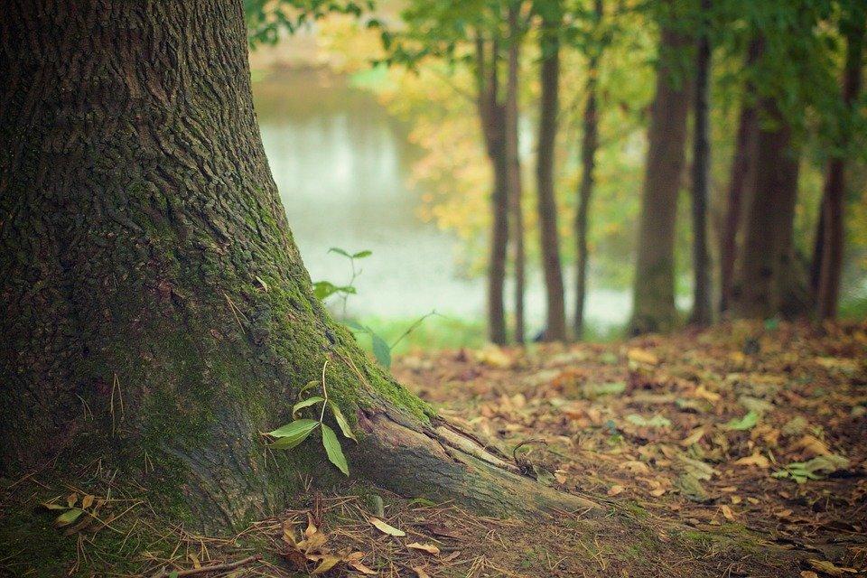 В Ленобласти нашли останки 11 подростков, погибших во время ВОВ