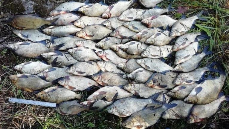 Рыбаку из Ленобласти грозит до двух лет лишения свободны за ловлю лещей