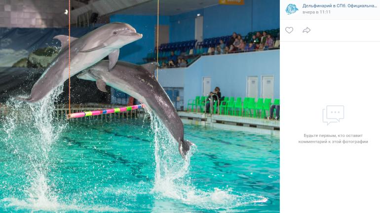 В Калининском районе Петербурга может появиться дельфинарий