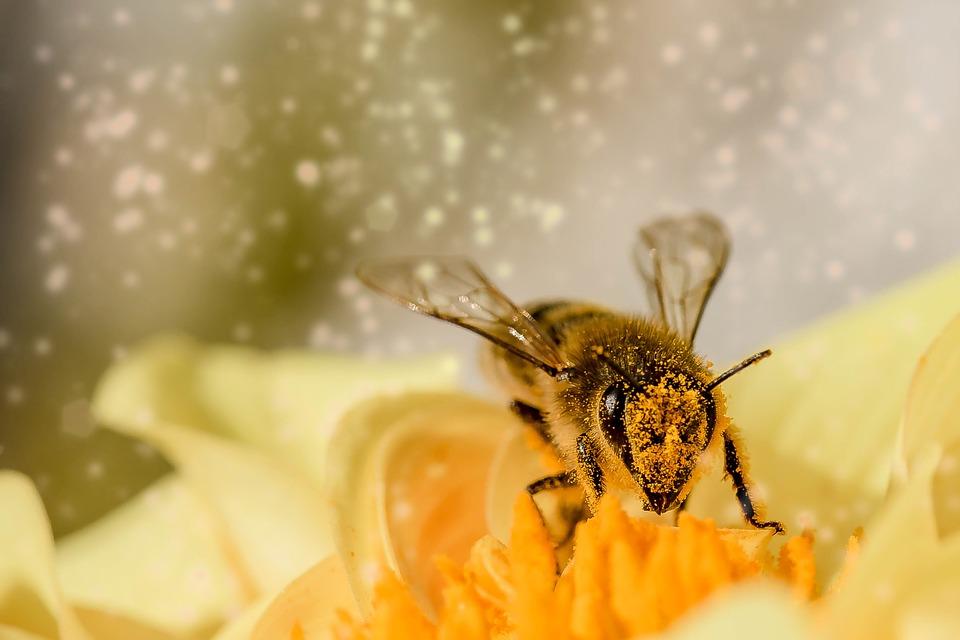 Ученые выяснили, что пчелы поддаются дрессировке