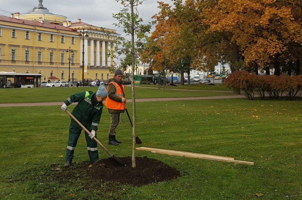 Весной петербургский «Сад памяти» пополнят более 2000 деревьев и кустарников