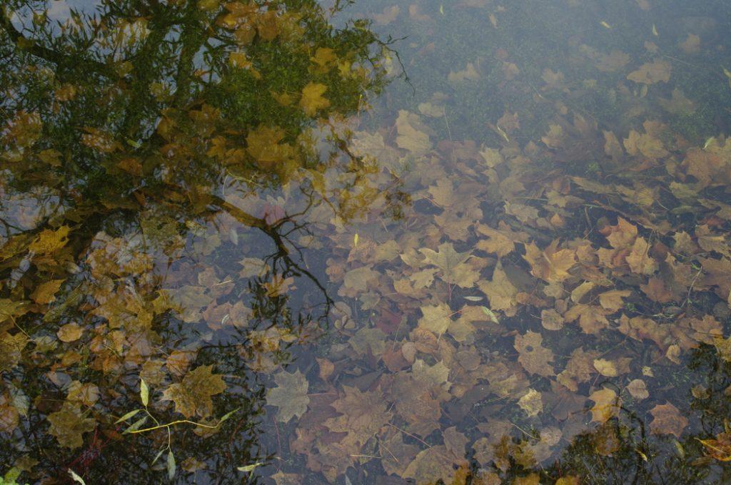 В Ленобласти пройдут небольшие дожди в воскресенье