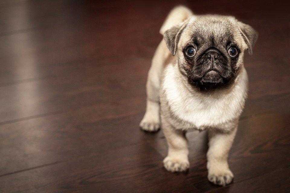 Ученые Финляндии назвали самых агрессивных собак
