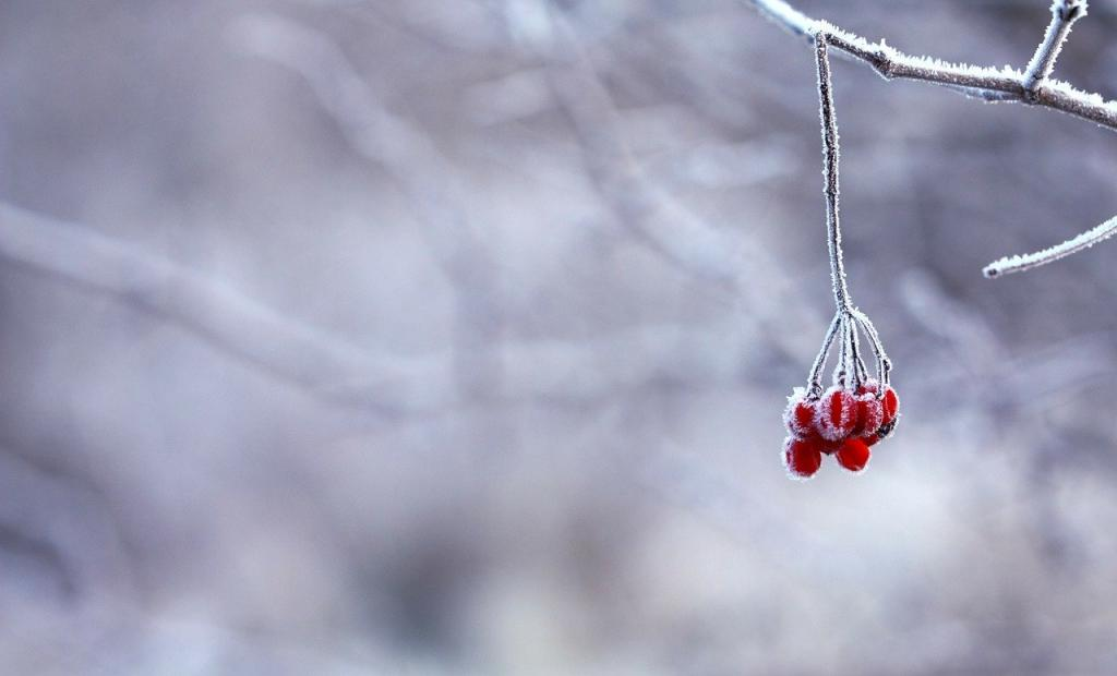 Во вторник в Петербурге выпадет мокрый снег