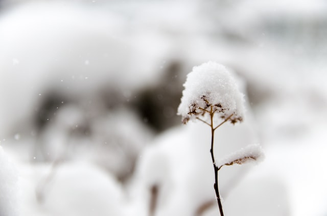 Главный синоптик города: снег останется в Петербурге еще на три дня