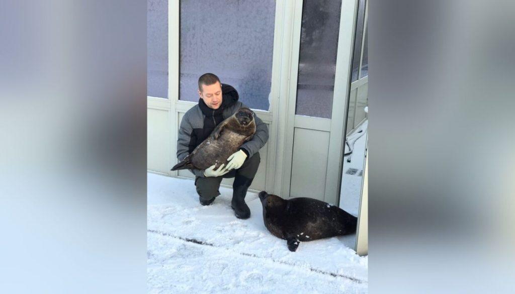 В Петербурге от морозов спрятались даже тюлени