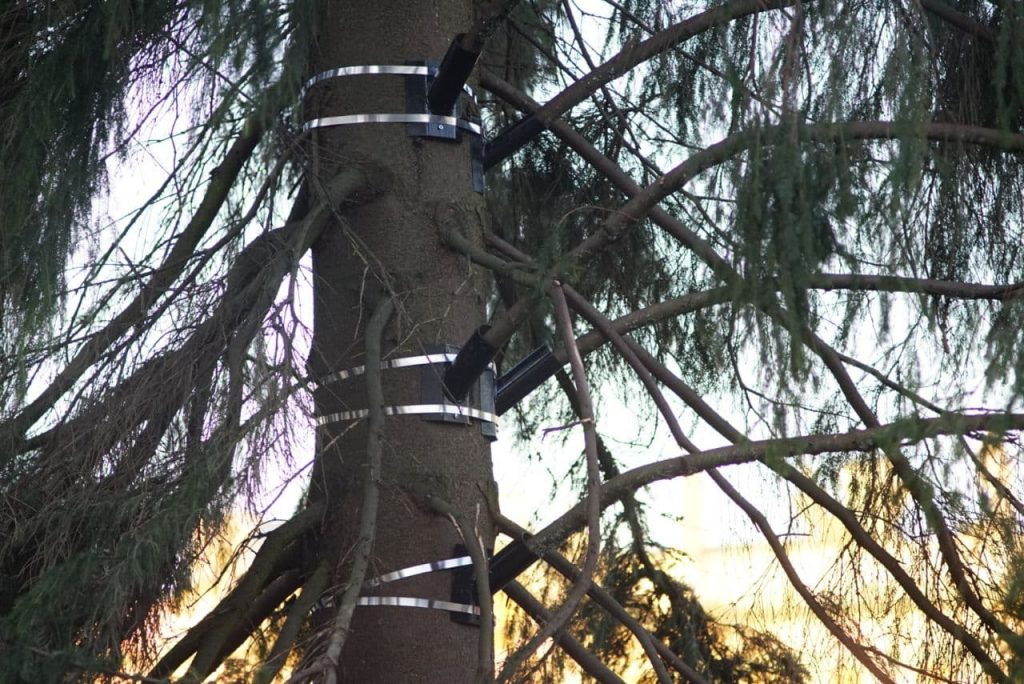 Фоторепортаж Gazeta.Spb: живую елку на Дворцовой собирают «по частям»