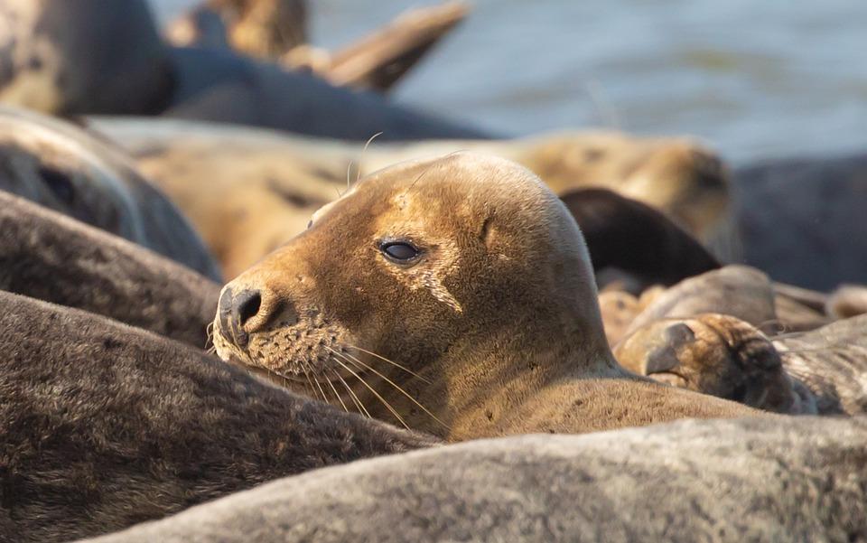 Ученые в Антарктиде доказали, что тюлени общаются под водой с помощью ультразвука