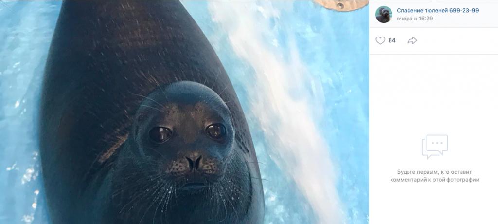 Двух петербургских тюленей переместили в дом из-за сильных морозов