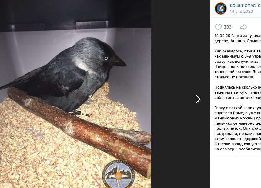 Волонтеры «Кошкиспас» рассказали, сколько животных спасли в Петербурге за 2020 год