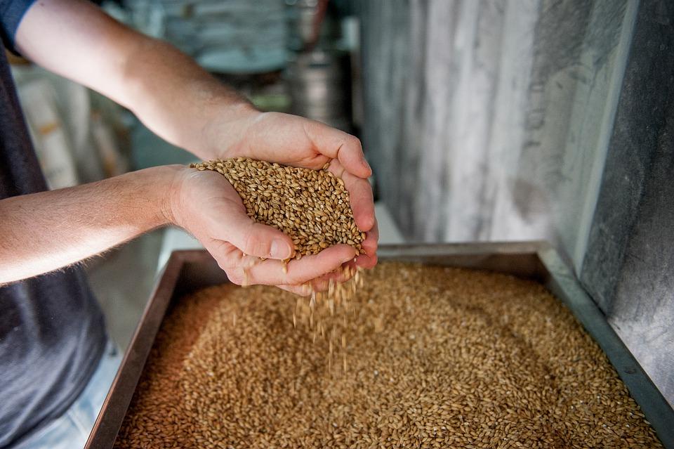 Из Петербурга в Латвию отправится более 1 тысячи тонн солода