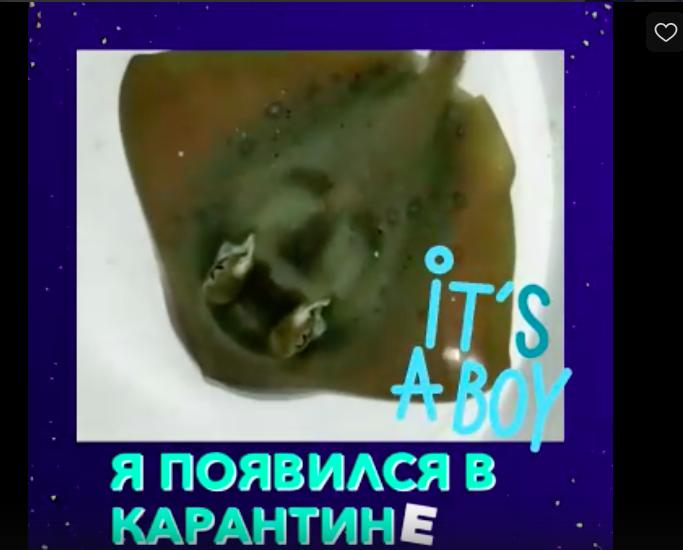 В океанариуме Петербурга впервые появился на свет морской скат