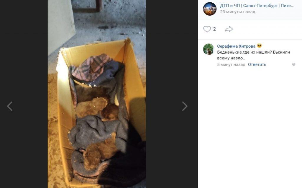 Пожарные спасли котят из полыхающей «Невской мануфактуры»