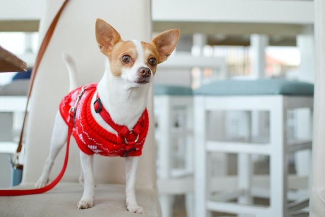 ЗакС внес в Госдуму законопроект о правилах посещения магазинов с животными