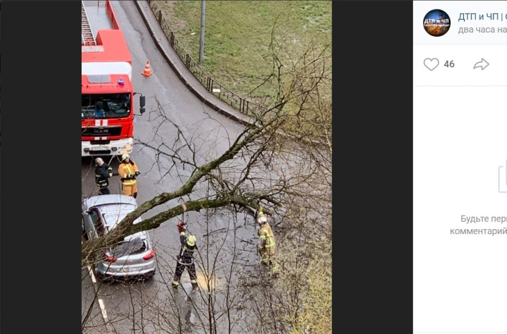 В Петербурге от ветра дерево упало на машину