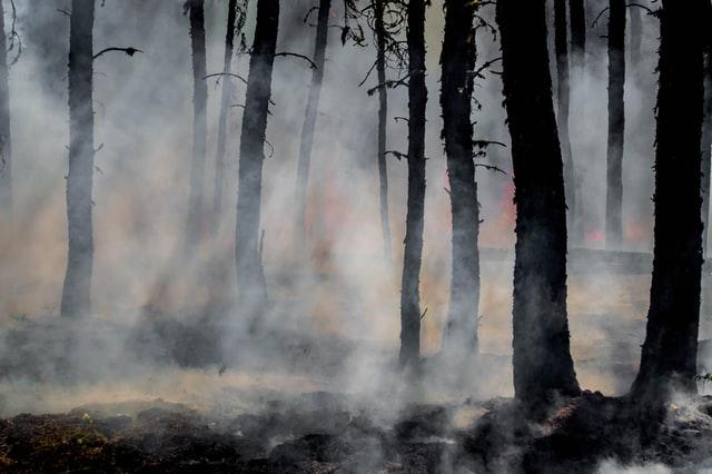 Пожары охватили 43 гектара леса Минобороны в Ленобласти