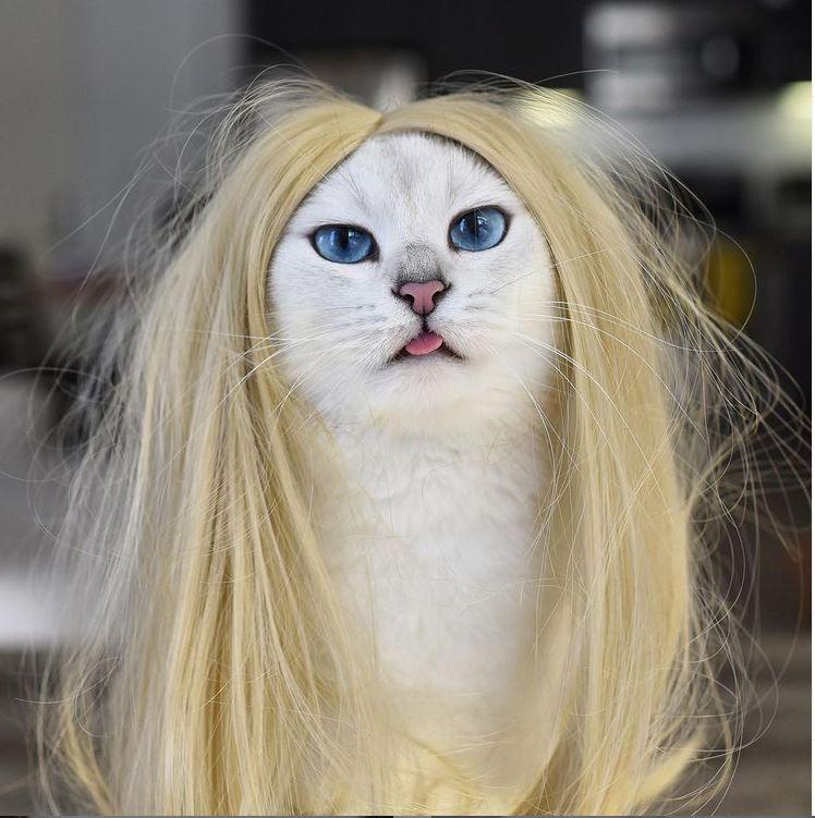 Самые знаменитые коты и кошки интернета