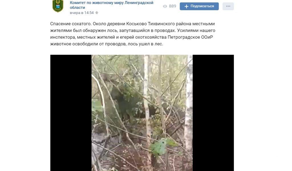 Запутавшегося в проводах лося спасли у деревни в Ленобласти