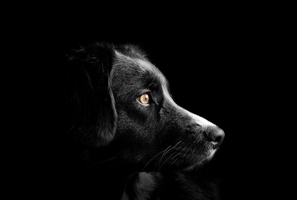 В Красном Селе до смерти избили собаку по кличке Гуф